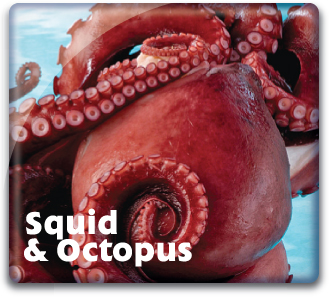 Squid & Octopus