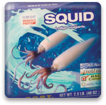 Sea Port Squid